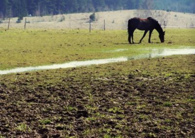 konie-0001
