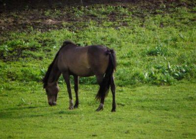 konie-0003
