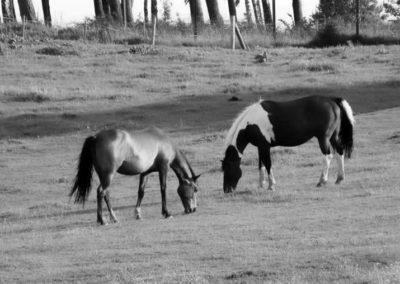 konie-0006