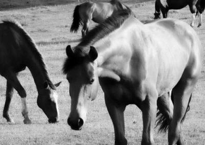 konie-0007