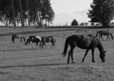 konie-0011