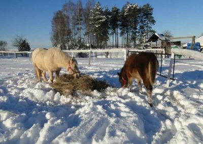 konie-0018