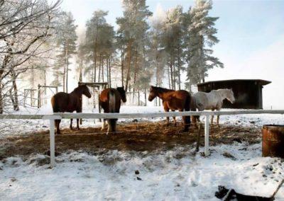 konie-0019
