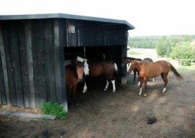 konie-0020