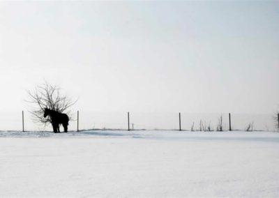 konie-0021