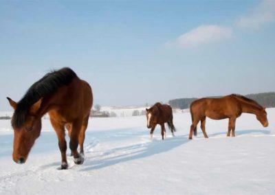 konie-0022