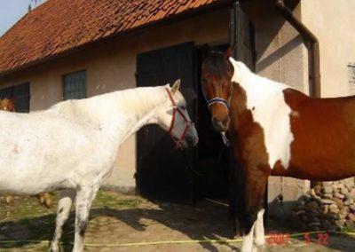 konie-0026
