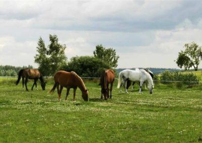 konie-0031