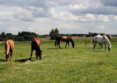 konie-0032