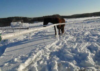 konie-0034