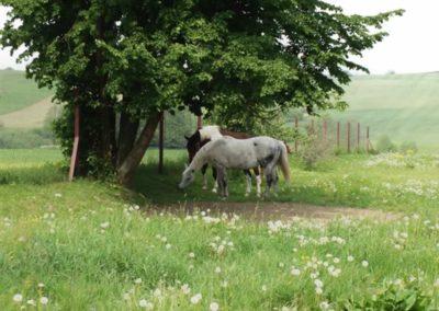 konie-0035