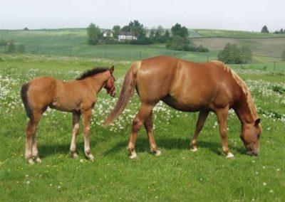 konie-0036