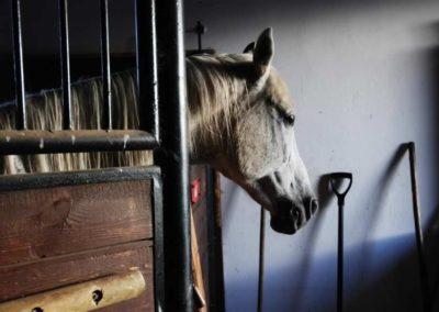 konie-0037