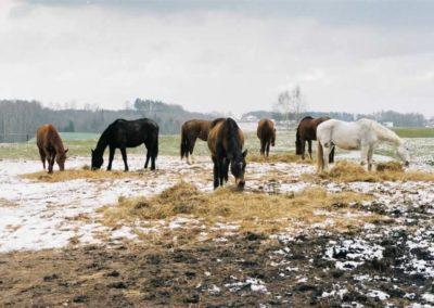 konie-0038