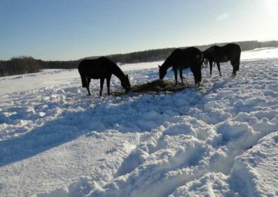 konie-0039