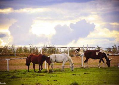 konie-0040