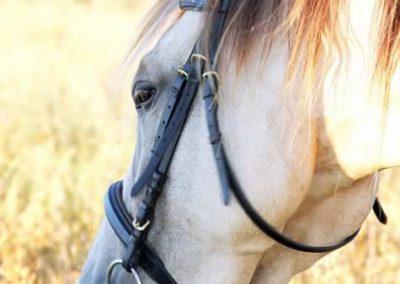 konie-0042