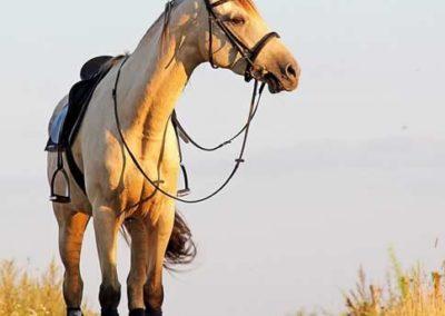 konie-0043
