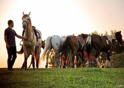 konie-0049