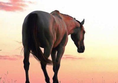 konie-0053