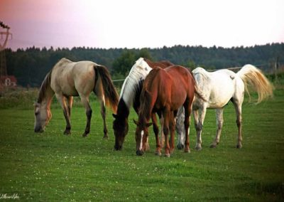 konie-0054