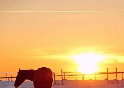 konie-0055