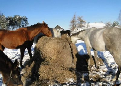 konie-0056