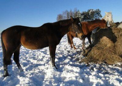 konie-0057