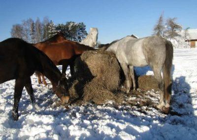 konie-0058