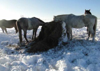 konie-0059