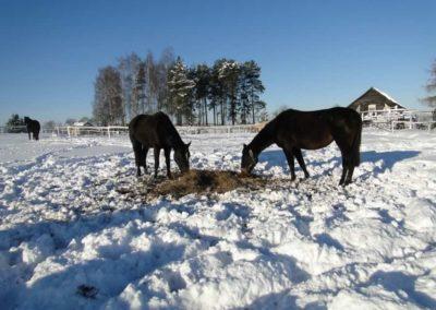 konie-0060