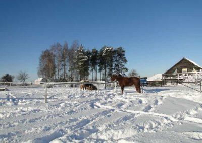 konie-0061