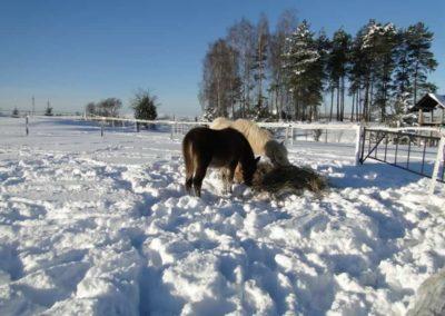 konie-0062