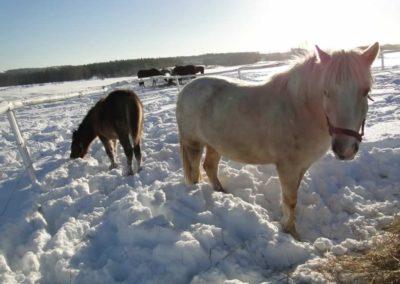 konie-0066