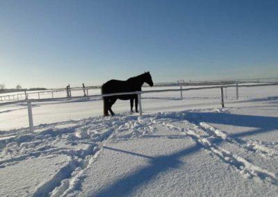 konie-0067