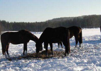 konie-0068