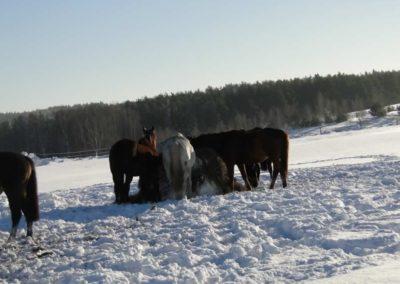 konie-0069