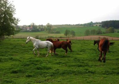 konie-0070