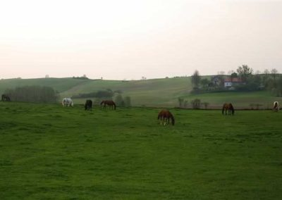 konie-0071