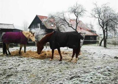 konie-0072
