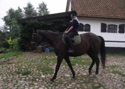 oboz-konie-2011-0009