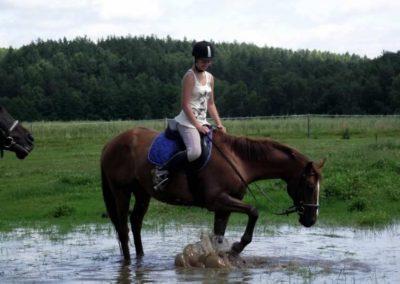 oboz-konie-2011-0039
