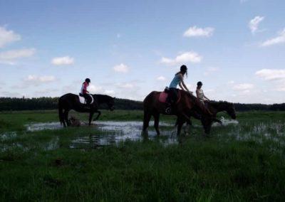 oboz-konie-2011-0040