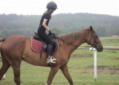 oboz-konie-2011-0049