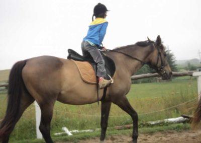 oboz-konie-2011-0068