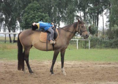 oboz-konie-2011-0069