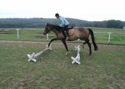 oboz-konie-2011-0084