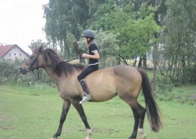oboz-konie-2011-0087