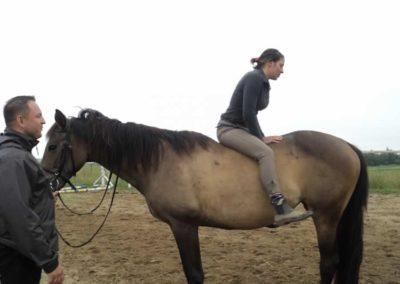 oboz-konie-2011-0094