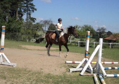 oboz-konie-2011-0102